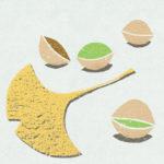 銀杏 / 鉛筆,折紙,フォトショップCS4