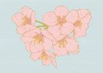 桜 / 鉛筆,折紙,フォトショップCS4